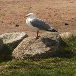 Southerness bird wildlife